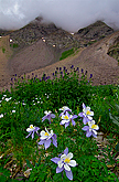 columbine sneffels wilderness